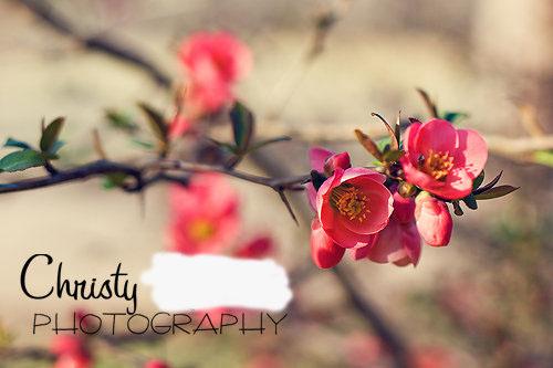 Pinkflowersb